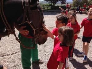 2015-05-08 Sant Mateu de Bages (11)