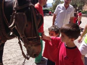 2015-05-08 Sant Mateu de Bages (6)